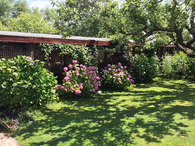 Cattery is situated in East Sussex, surrounded by lovely gardens
