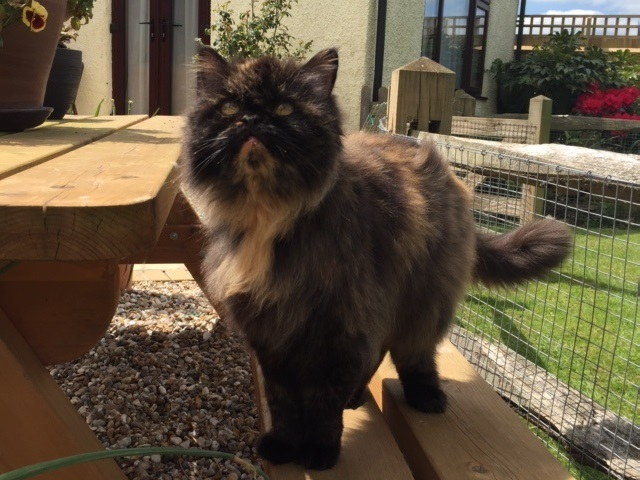 Cat groomers long haired cat after grooming 640