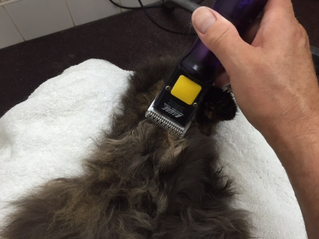 Cat groomers long haired cat clippers 640
