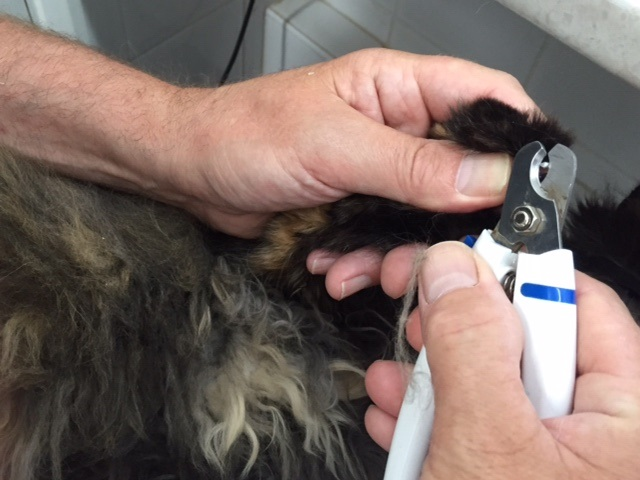 Cat groomers long haired cat nails clipped 640