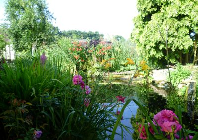 Cattery East Sussex pond 600