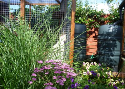 Cattery East Sussex resident 600
