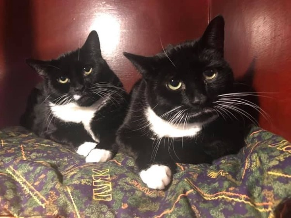 Marshfoot Cattery Buster & Billy