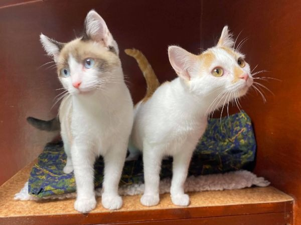 Marshfoot Cattery residents Barney & Freddy