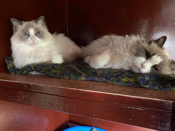 Marshfoot Cattery residents Casper & Crystal