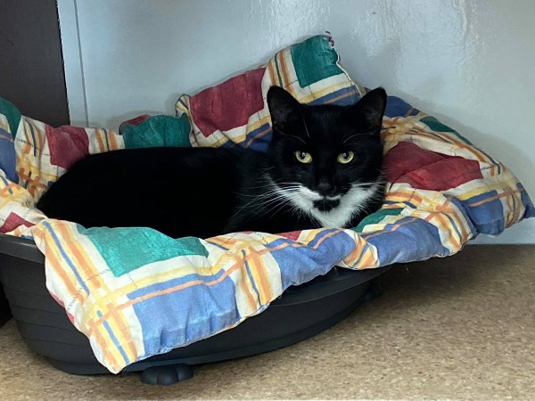 Marshfoot Cattery resident Dave