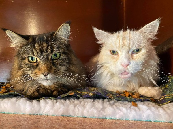 Marshfoot Cattery residents Magic Paws & Mr Thompkinson